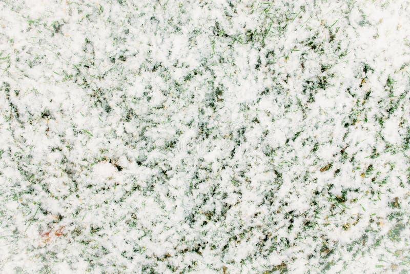 Grönt gräs som täckas med snö Härlig bakgrund snow royaltyfri bild