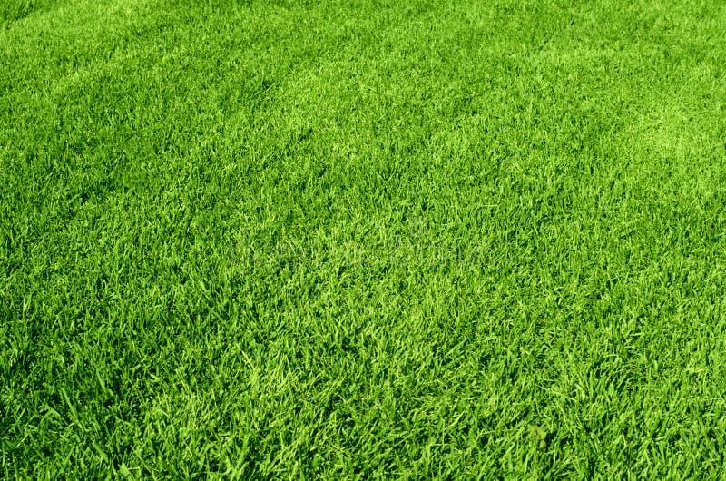 Grönt gräs texturerar royaltyfria foton