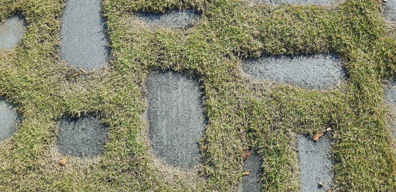 Grönt gräs växer på vaggar bakgrundsfotoet textur royaltyfri bild