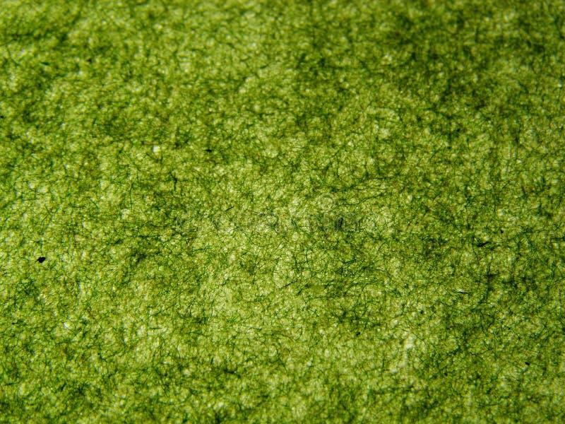 grönt handgjort papper royaltyfri bild