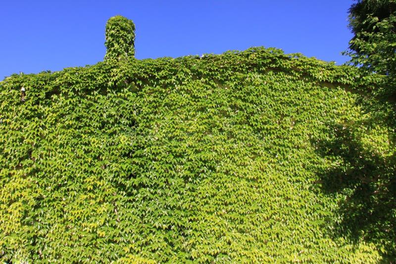 grönt hus för eco arkivbilder