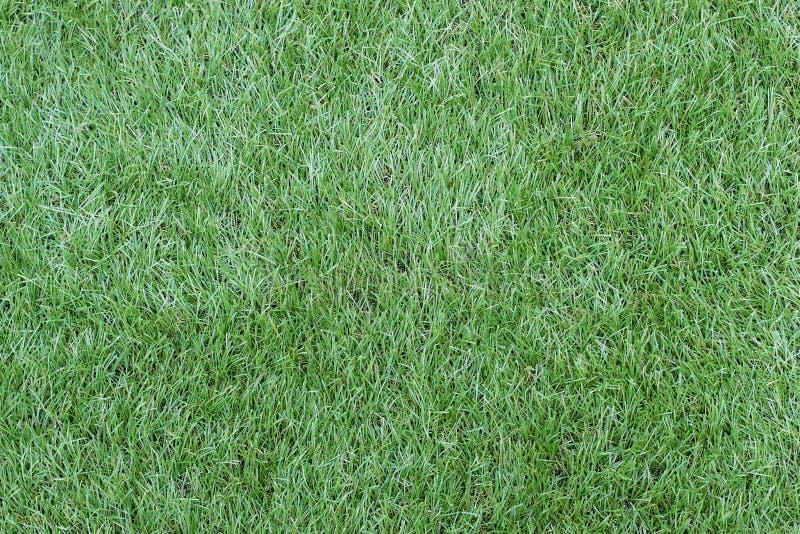 Grönt konstgjort grässlut upp, textur och bakgrund royaltyfri fotografi
