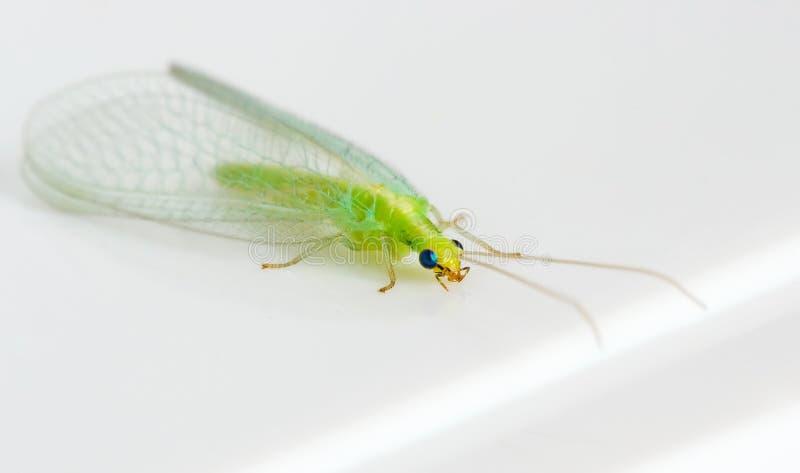 grönt kryp arkivbild