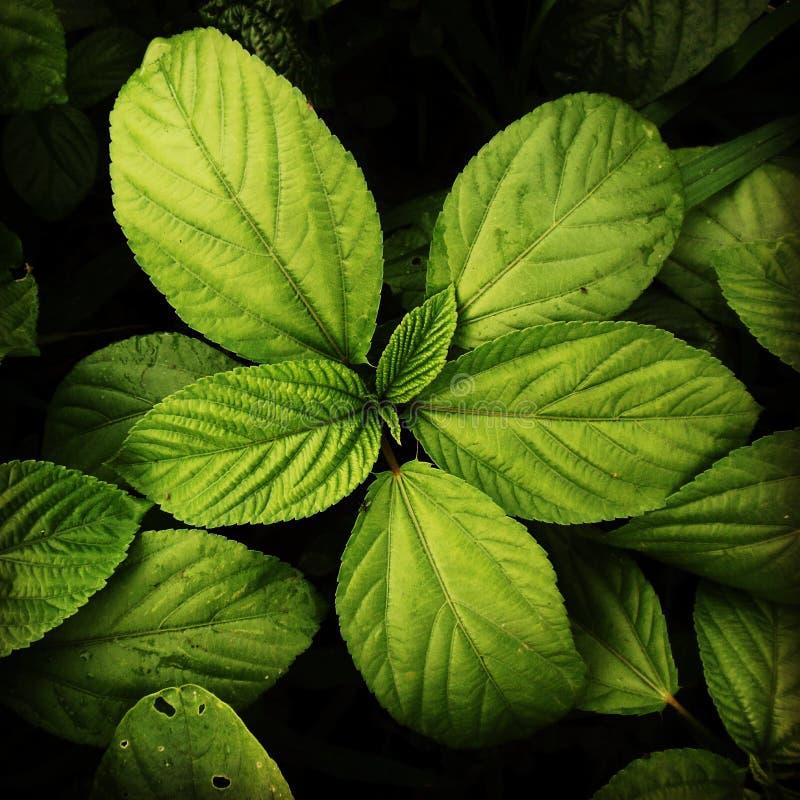 grönt lövrikt royaltyfri fotografi