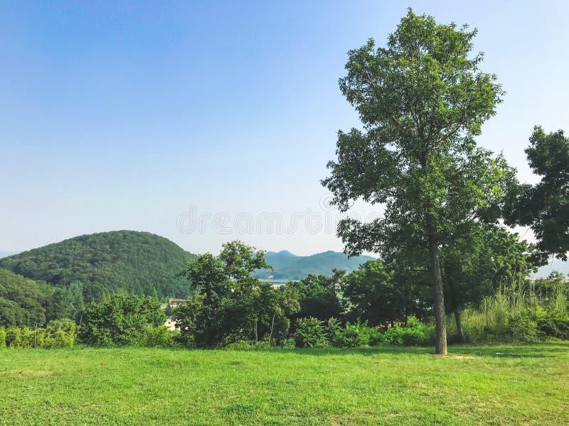 Grönt landskap för sommar i Sydkorea arkivbild