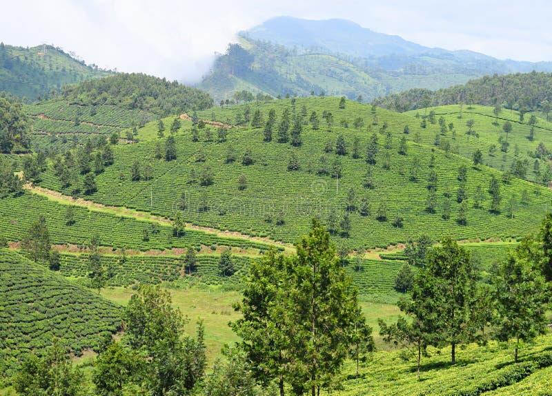 Grönt landskap i Munnar, Idukki, Kerala, Indien - naturlig bakgrund med berg och teträdgårdar arkivbild