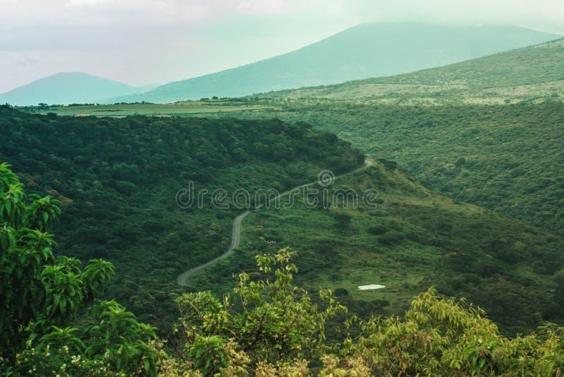 Grönt landskap med massor av träd en väg och en kanjon arkivfoton