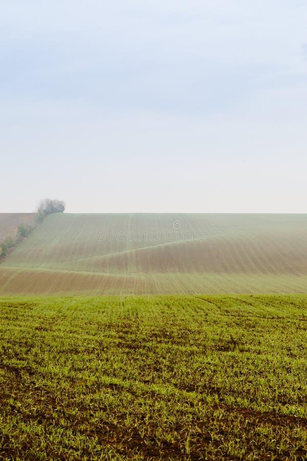 Grönt lantgårdfält i den dimmiga morgonen arkivbilder