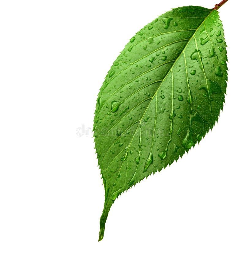 grönt leafvatten för liten droppe arkivbild