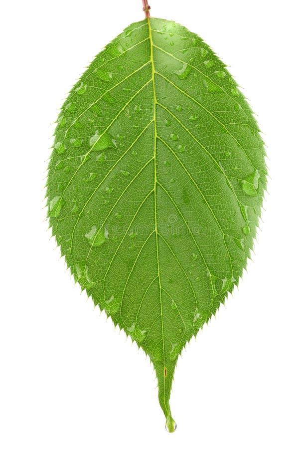 grönt leafvatten för liten droppe fotografering för bildbyråer