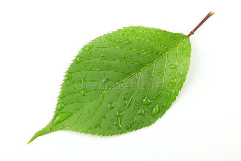 grönt leafvatten för liten droppe royaltyfria foton