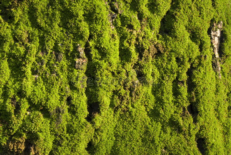 grönt mossy royaltyfria foton