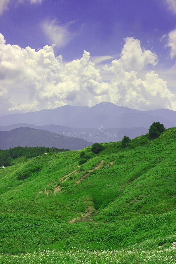 grönt mountan för fält arkivfoto
