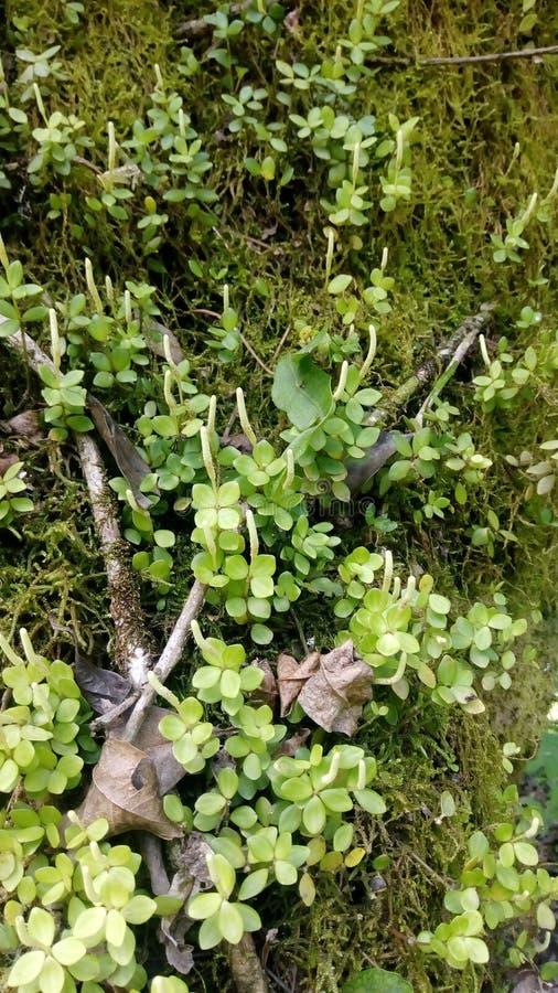 grönt naturligt arkivbild