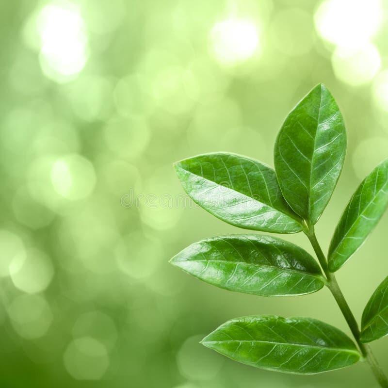 grönt naturligt för bakgrund arkivbild