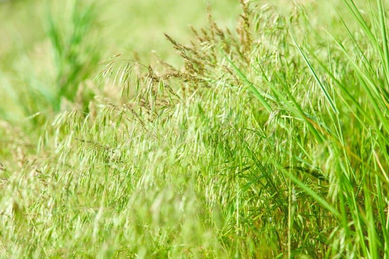 grönt naturligt för gräs royaltyfria foton