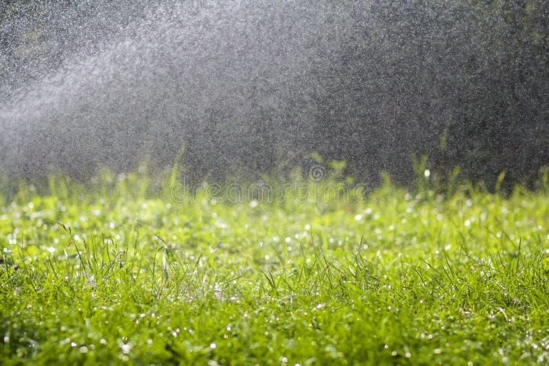 Grönt nytt gräs med fallande droppar av morgonregnvatten Härlig sommarbakgrund med bokeh och suddig bakgrund Låg dep royaltyfria bilder
