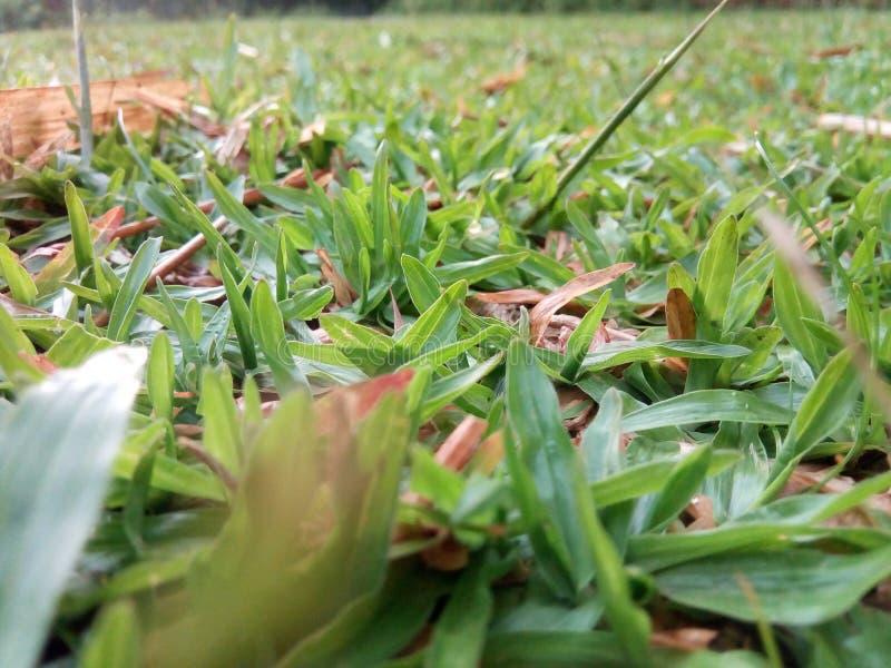 Grönt nytt härligt gräs royaltyfria foton