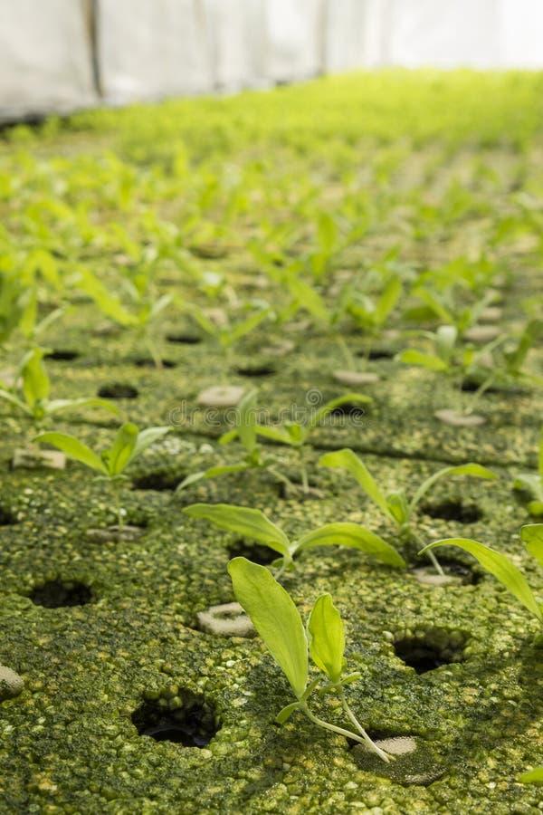 Grönt organiskt växthus arkivfoton
