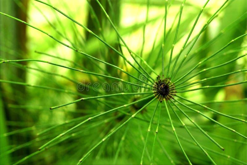 grönt paradis arkivfoton