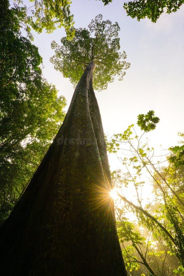 Grönt planetbegrepp, gigantiskt träd som når till himmel arkivbild