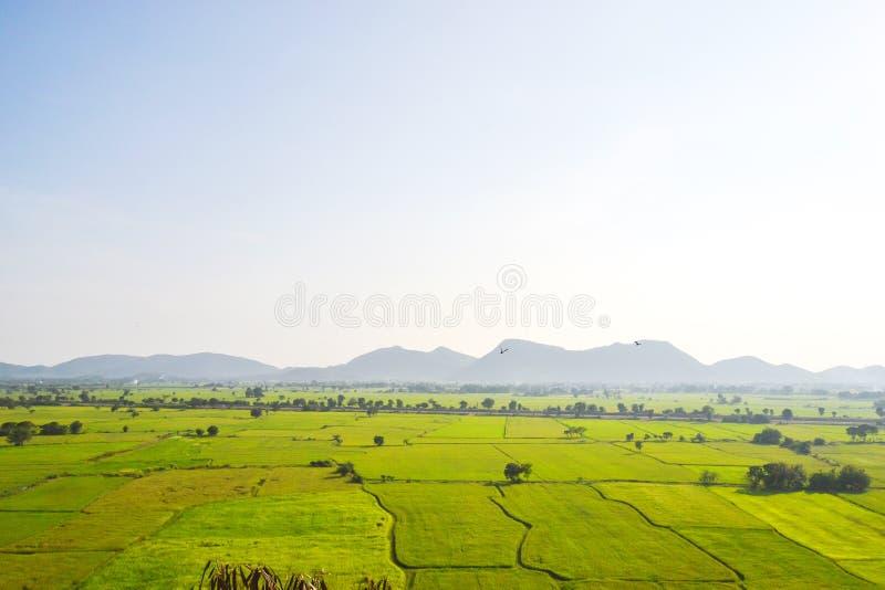 Grönt Ricefält i Kanchanaburi, thailand royaltyfria bilder