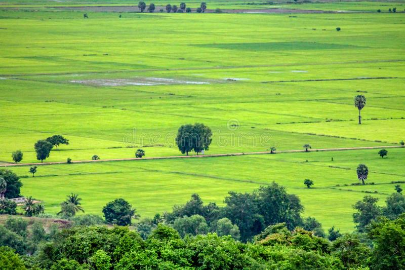 Grönt risfältlandskap i Kambodja royaltyfri bild