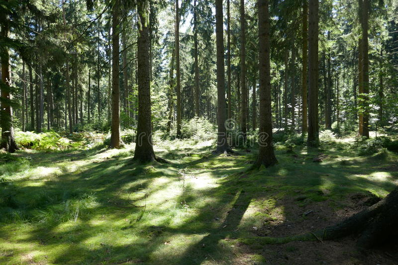 Grönt skoggolv royaltyfri foto