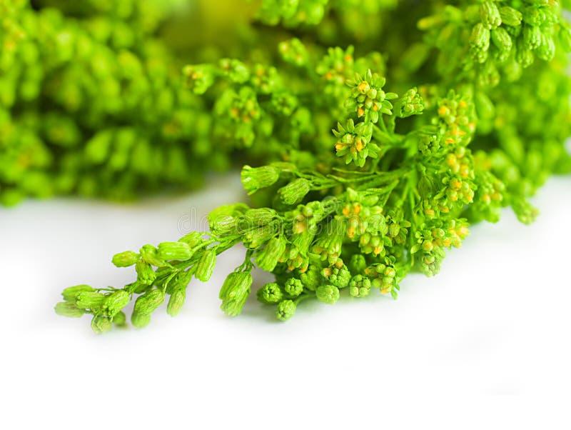 Download Grönt sommargräs i en sun fotografering för bildbyråer. Bild av frihet - 27282221