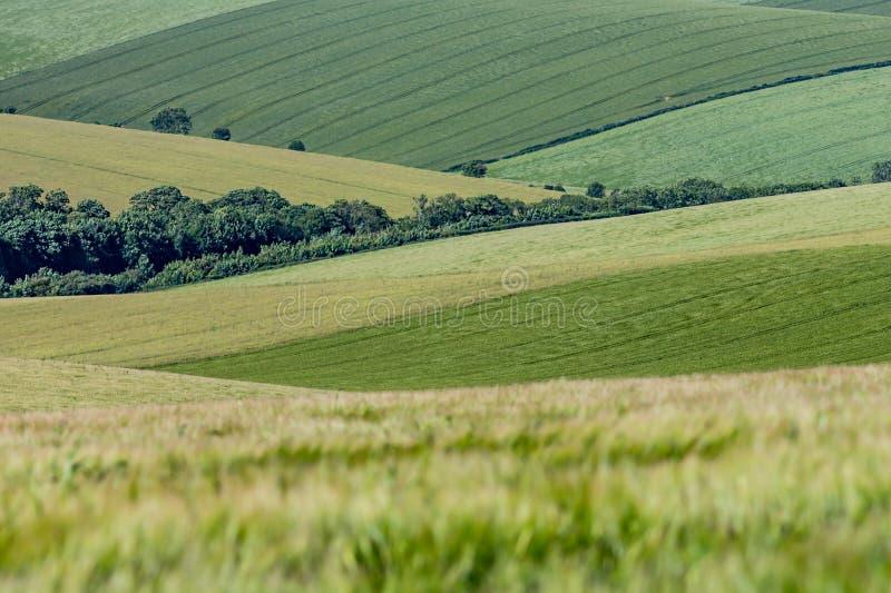 Grönt Sussex landskap arkivfoton
