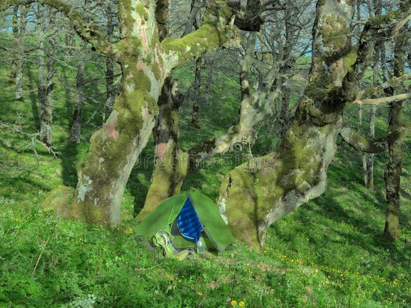 Grönt tält under sekulära ekar i Malabotta trä royaltyfri foto