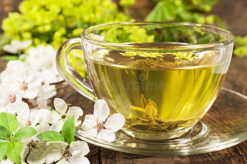 Grönt te med den körsbärsröda blomningen royaltyfri fotografi