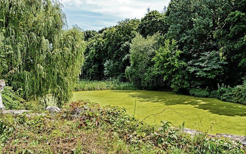 Grönt trä fotografering för bildbyråer