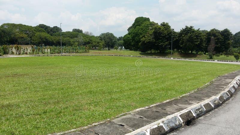 Grönt träd för asfalt för fältsport arkivfoto