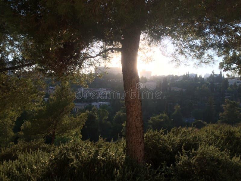 Grönt träd i aftonen royaltyfri foto