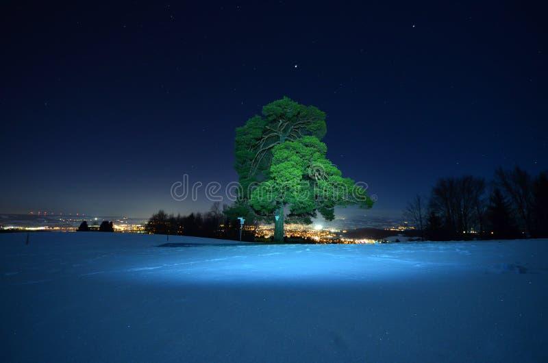 Grönt träd i vinternatt royaltyfria foton