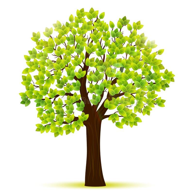Grönt träd med sidavektorn stock illustrationer