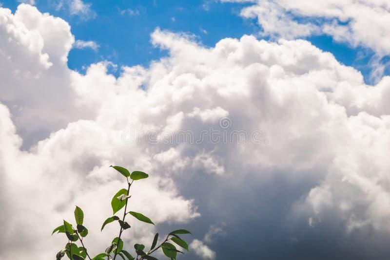 Grönt träd mot vita moln i blå himmel royaltyfri foto