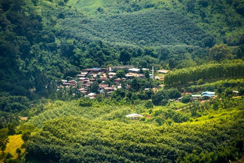 Grönt träd- och hustak royaltyfria foton
