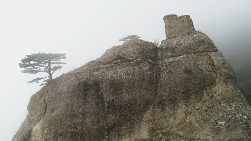 Grönt träd på kanten av klippan i dimma skjutit Stenpelaren vaggar på fördjupat i tät dimma Mystisk atmosfär av höstdimma royaltyfri foto