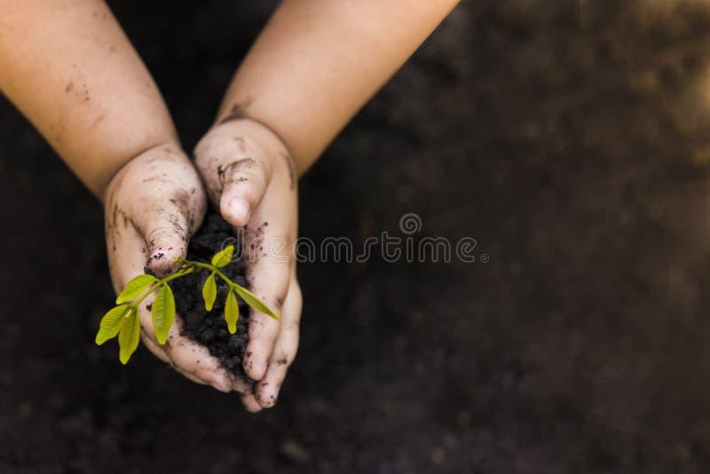 Grönt träd som planterar världsgräsplan rees med pengar, sparande pengar och växande händer arkivfoto