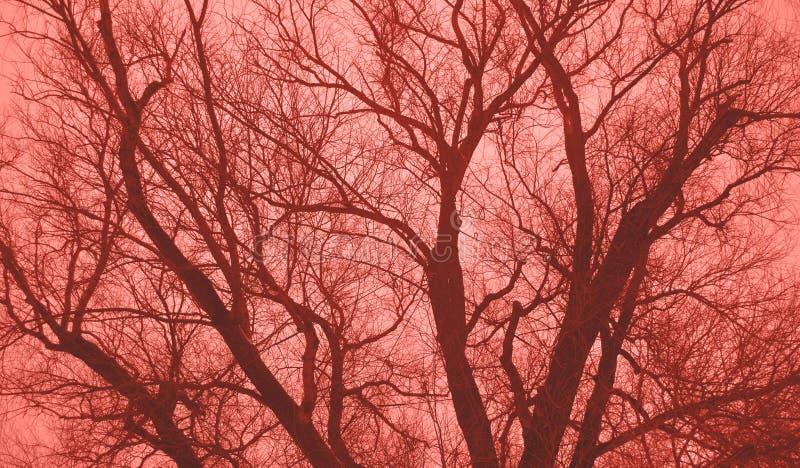 Grönt träd utan sidor mot himlen Tonat i korallfärg arkivfoto
