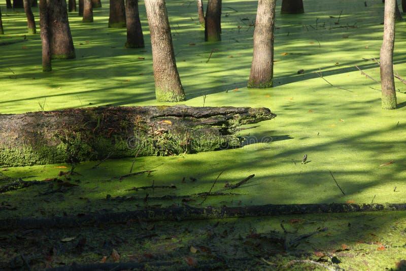 Grönt träsk på den Raritan kanalen royaltyfria bilder