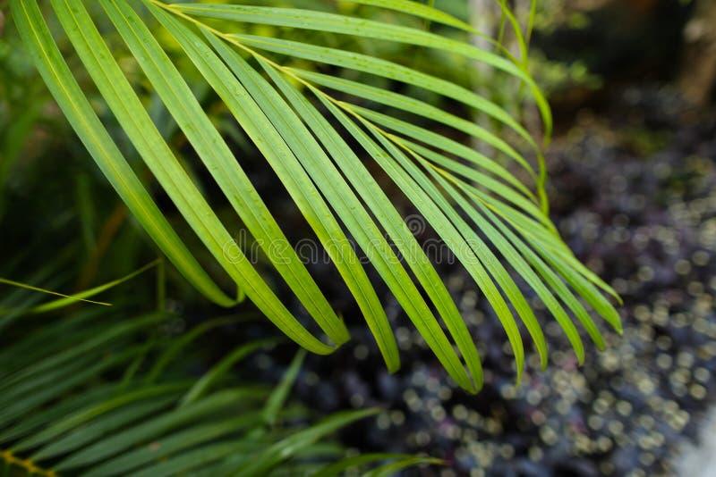 Grönt tropiskt blad, bakgrundsfoto royaltyfri bild