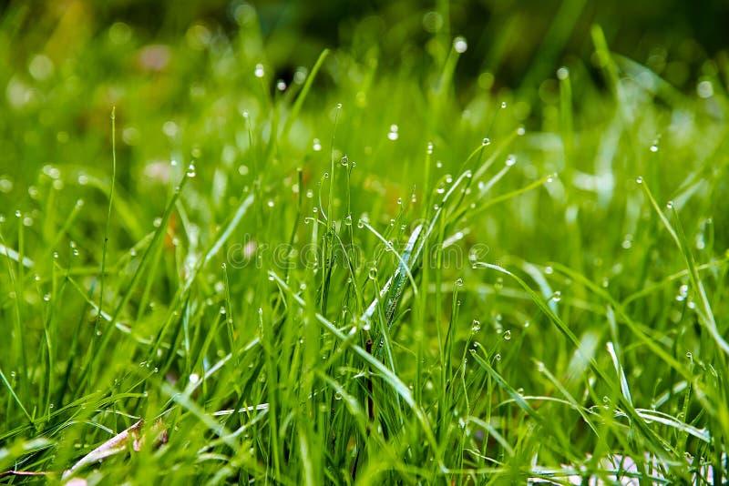 Grönt växande gräs royaltyfria foton