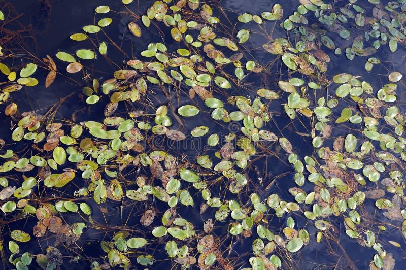 grönt växtvatten arkivfoton
