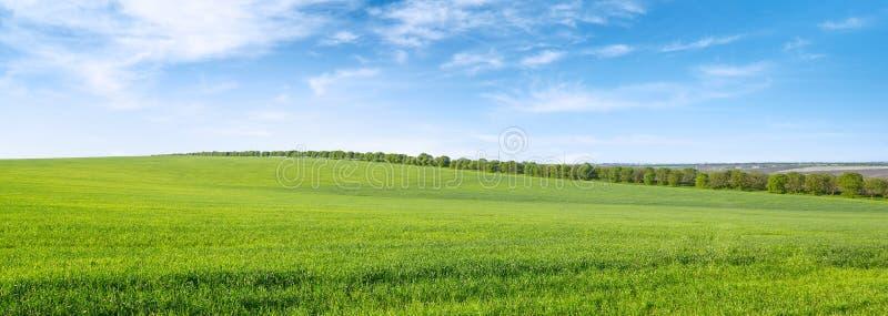 Grönt vårfält och blå himmel med vita moln arkivbilder
