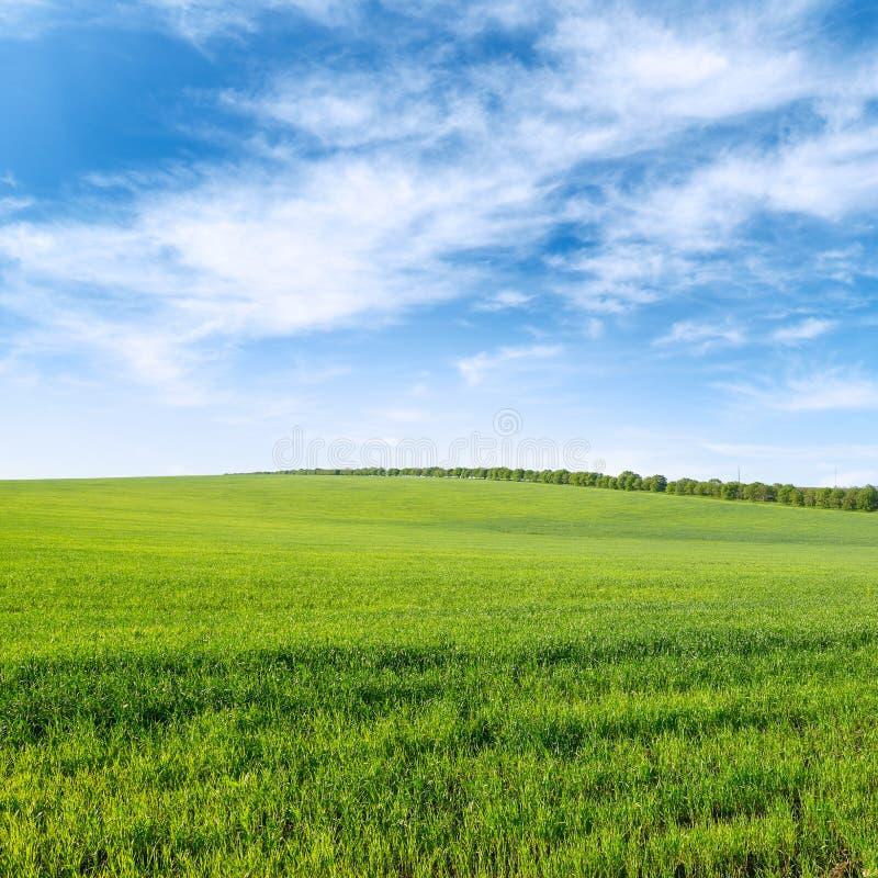 Grönt vårvetefält och blå himmel med moln fotografering för bildbyråer