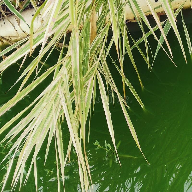 grönt vatten för gräs arkivfoton