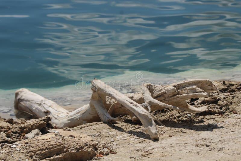 Grönt vatten och växt på sommarstranden arkivfoto
